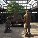 Музей бонсая