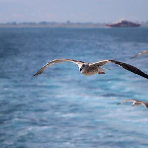 Греческий остров Тасос. Первое знакомство
