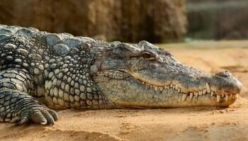Крокодил съел нарушителя карантина в Руанде