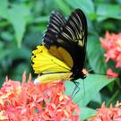 Парк бабочек Куала-Лумпура
