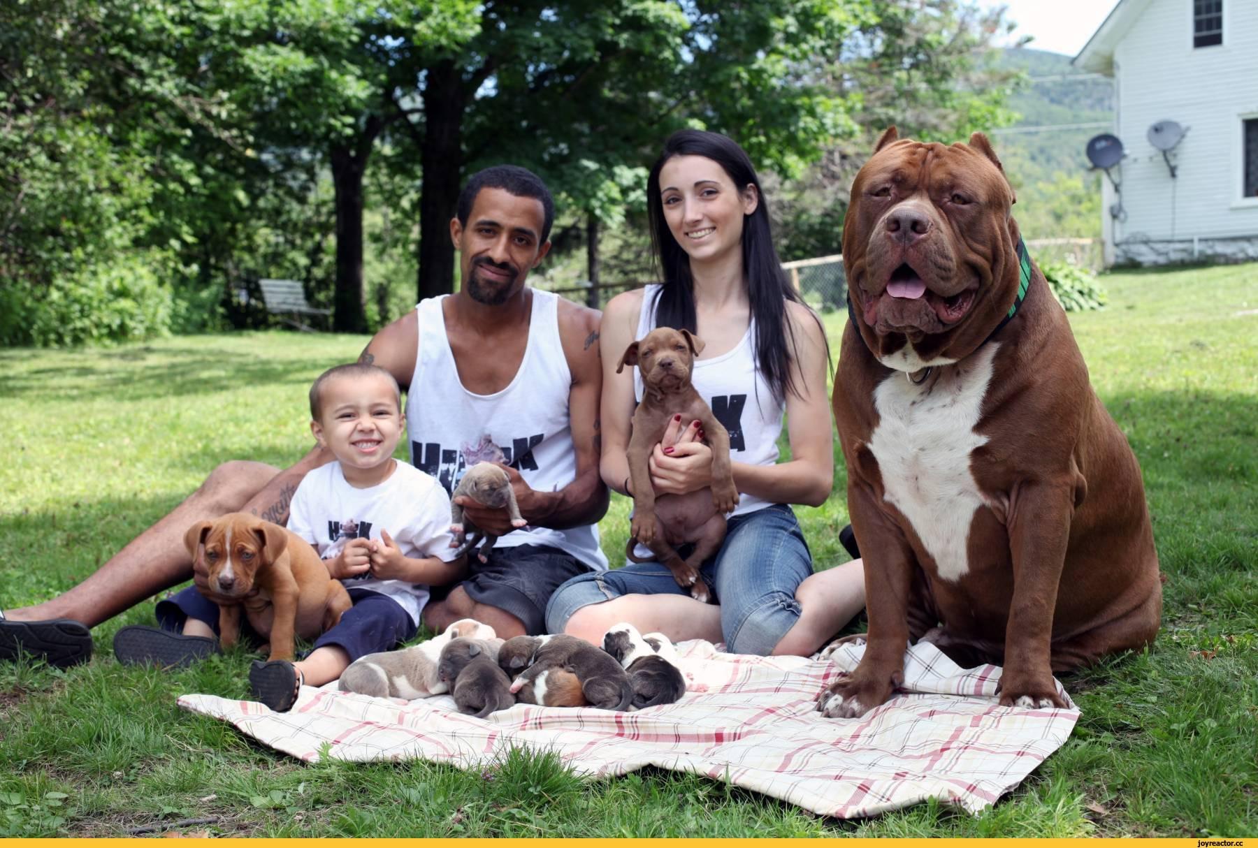 покажите самую большую собаку в мире картинки современный подбор