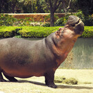 Зоопарк Гвадалахары в Мексике