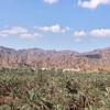 Финиковые плантации Фуджейра