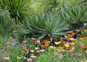 Никитские кактусы, Райский сад, Монтедор-3 в 1