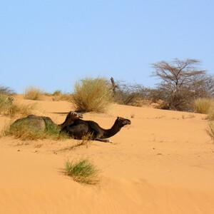 Мавритания. Разное