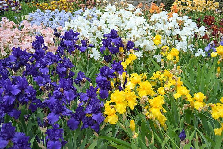 Никитский ботанический сад (карнавал ирисов)