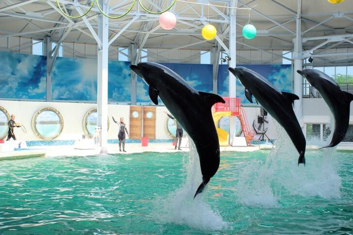 Дельфинарий Евпатории