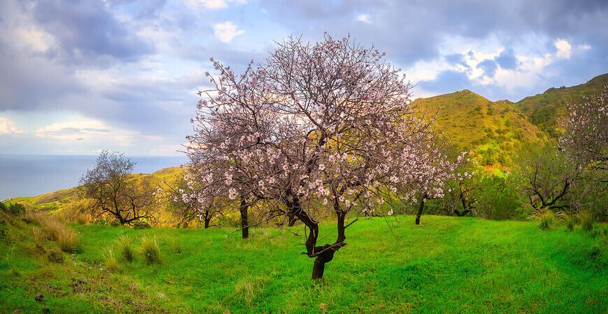 Фестиваль цветущего миндаля на Кипре