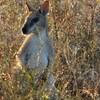 Круизная экскурсия в Дарвине