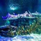 Аквариум «Sea Life» в Бенальмадене