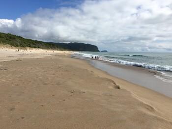 В Австралии и Новой Зеландии открывают пляжи