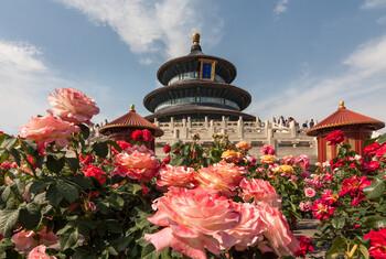 Китай в мае выполнит 448 международных авиарейсов