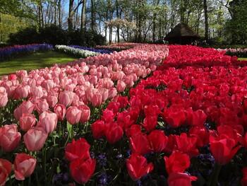 Туристы могут полюбоваться виртуальными цветочными фестивалями со всего мира