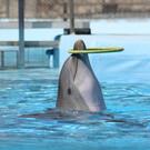 Дельфинарий «Selwo Marina»