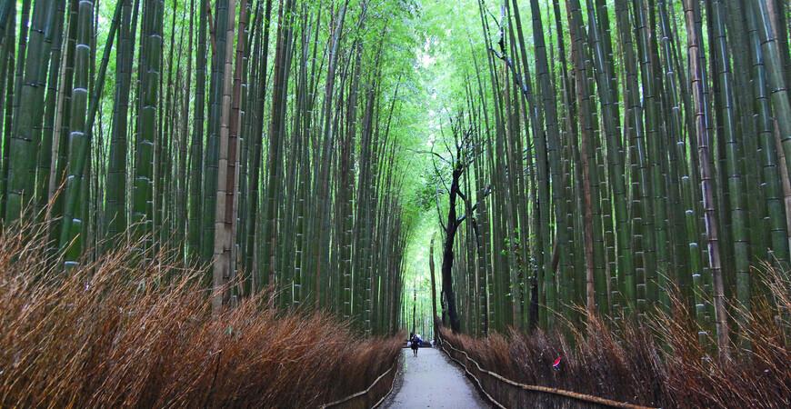 Бамбуковая роща Арасияма