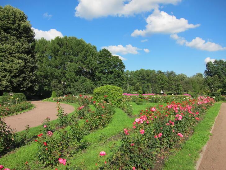 Большой розарий парка «Сокольники»