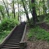 столетняя лестница