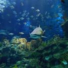 Океанариум «Aquaria KLCC»
