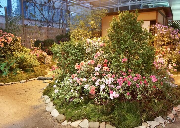 Оранжерея Ботанического сада МГУ