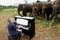 Пианист уже 20 лет играет классическую музыку для больных и слепых слонов, чтобы облегчить им боль (трогательные фото)