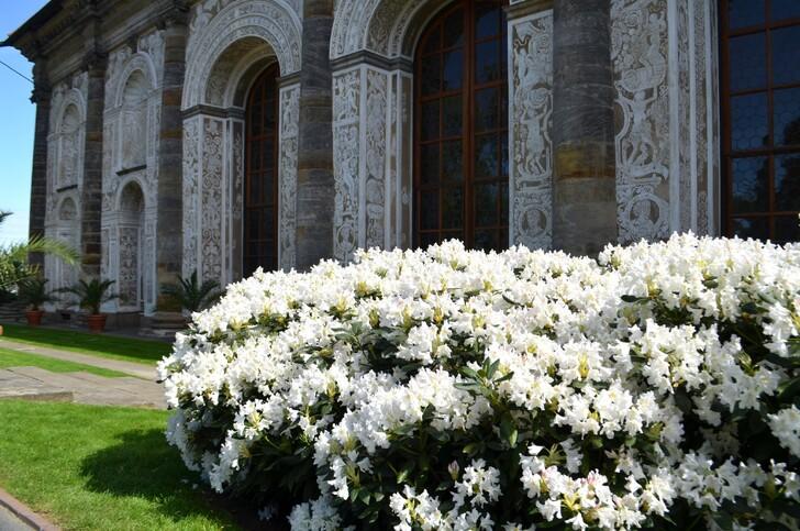 Королевский сад весной