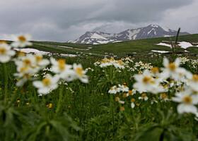 Каменное море цветов на Лагонаки