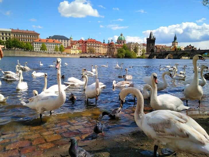 Что посмотреть в Праге за 4 дня
