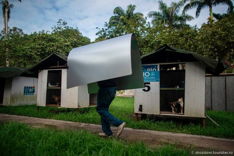 Бразильский приют организовал бесплатную доставку животных и прославился на весь мир (фото)
