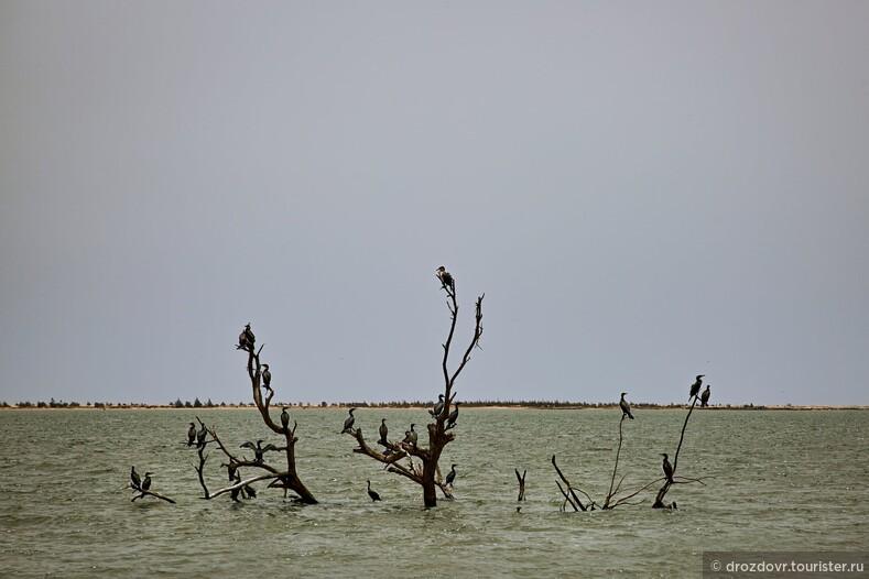 Вода отбирает у нас дом. Деревня в Сенегале проигрывает неравную схватку с Атлантическим океаном (фото)