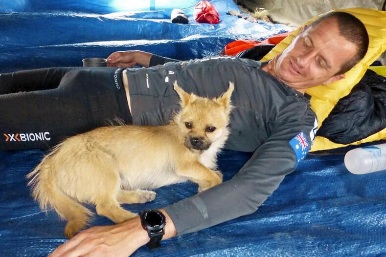 Бездомная собака полюбила спортсмена с первого взгляда и преодолела с ним марафон через пустыню (трогательная история дружбы)