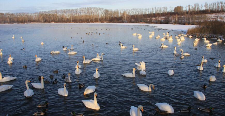 Озеро Светлое (Лебединое)<br/> в Алтайском крае