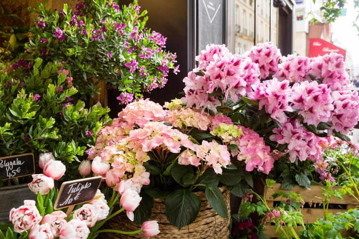 Весенние цветы в Париже