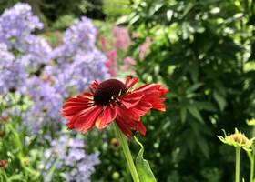 Июль в Ботаническом саду Эдинбурга