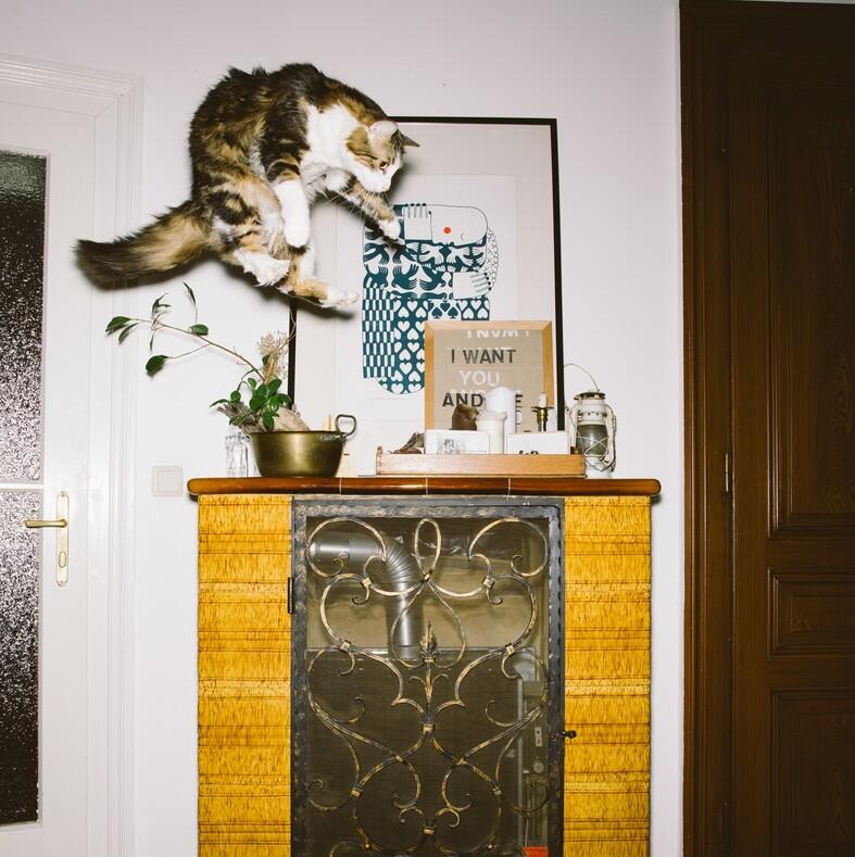 12 фото летающих котов тот момент, когда охота на вас открыта, а вы даже не успели осознать это