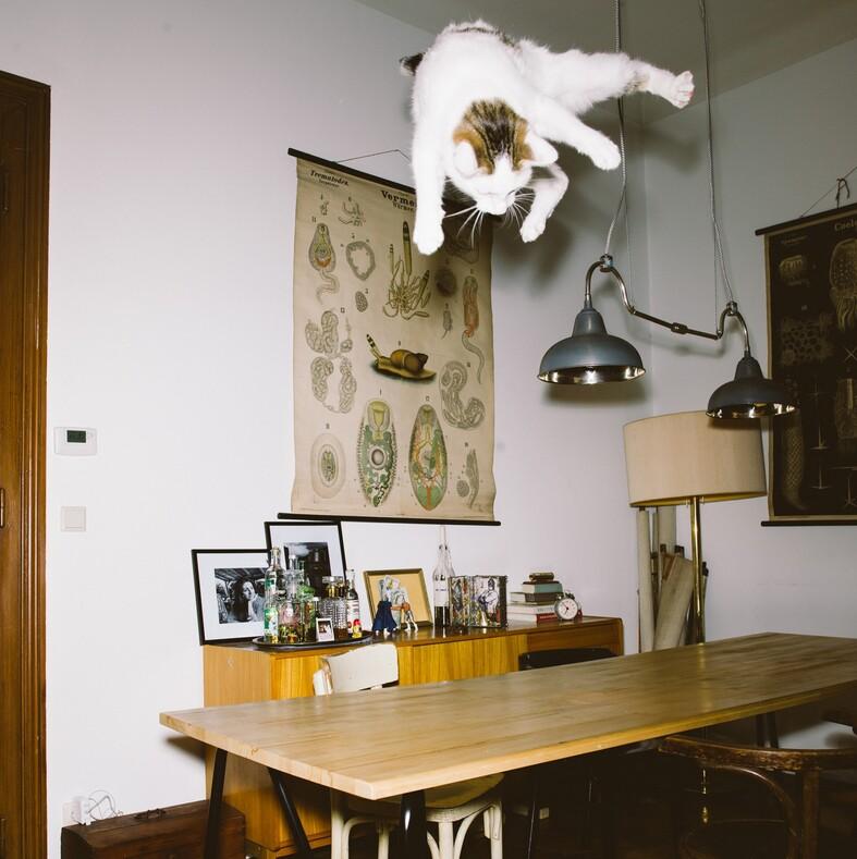12 фото летающих котов: тот момент, когда охота на вас открыта, а вы даже не успели осознать это