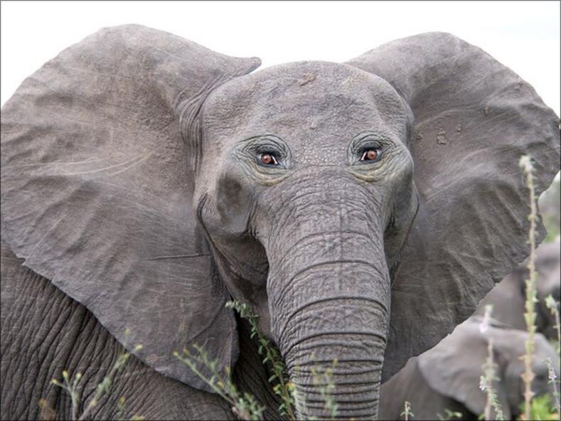 Фото: как будут выглядеть животные с глазами не по бокам, а спереди, как у человека (сюрреалистичные и смешные снимки)