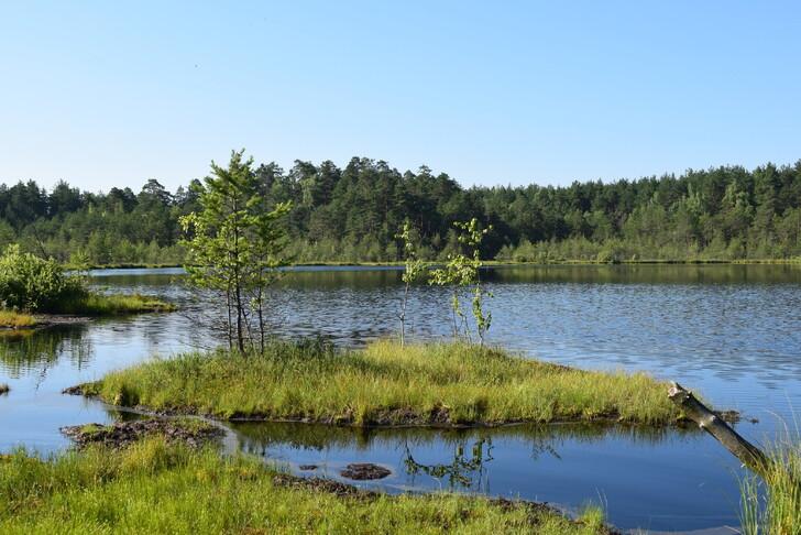 Озеро Плавучее во Владимирской области