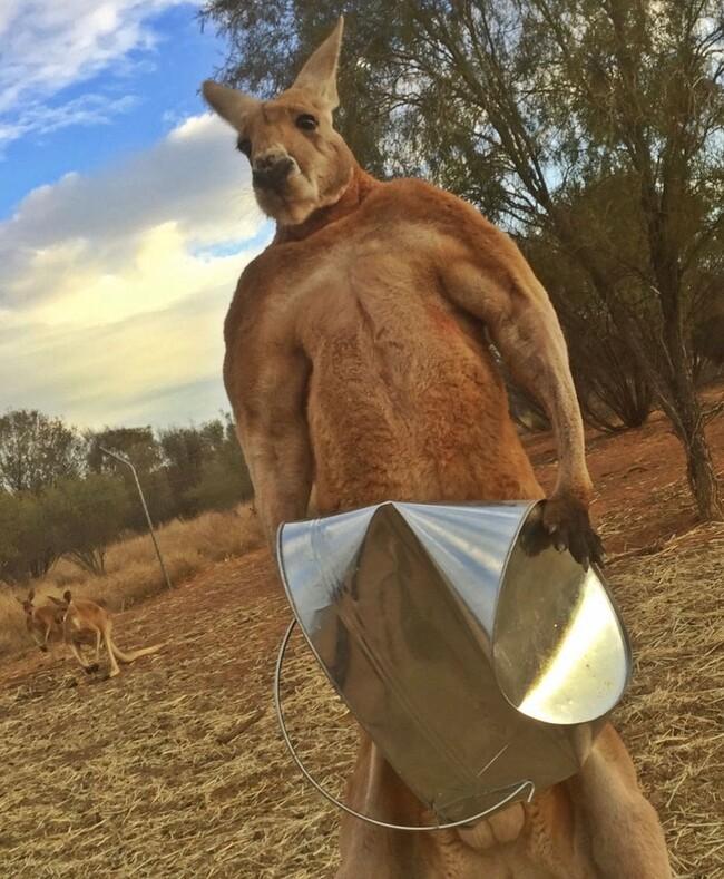 Один добрый поступок навсегда изменил его жизнь: мужчина спас малыша кенгуру и стал телеведущим