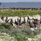 Лебяжьи острова в Крыму