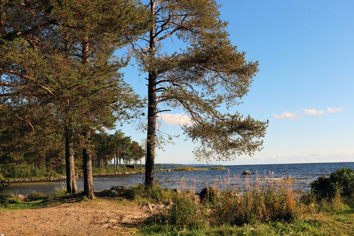 Онежское озеро (Медвежьегорск)