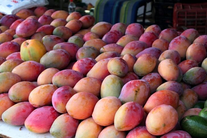 Манго – источник мудрости и король фруктов
