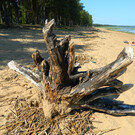 Пляж в Лебяжьем на Финском заливе