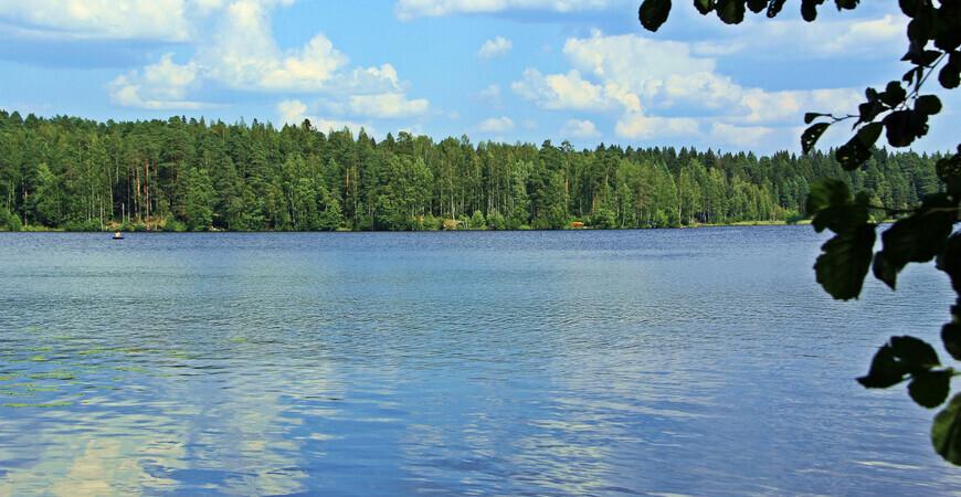 Щучье озеро в Комарово