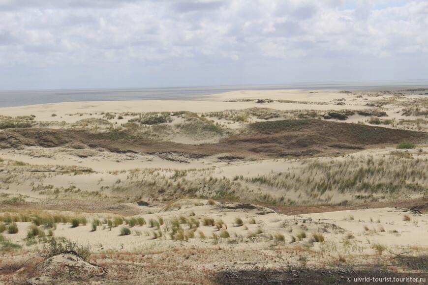 О лесах и песчаных дюнах куршей