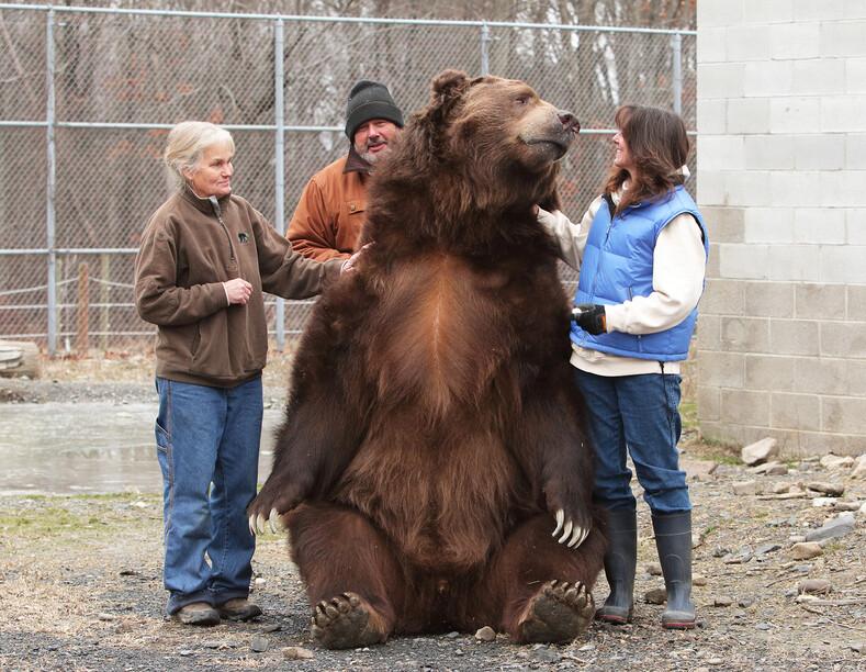 Жизнь с медведями семья спасает осиротевших медвежат и относится к ним, как к своим детям