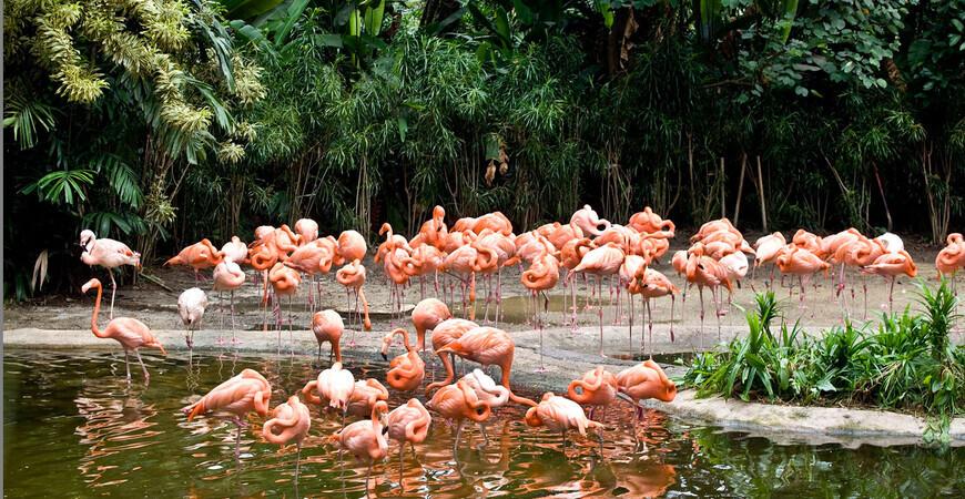 Парк птиц «Джуронг»