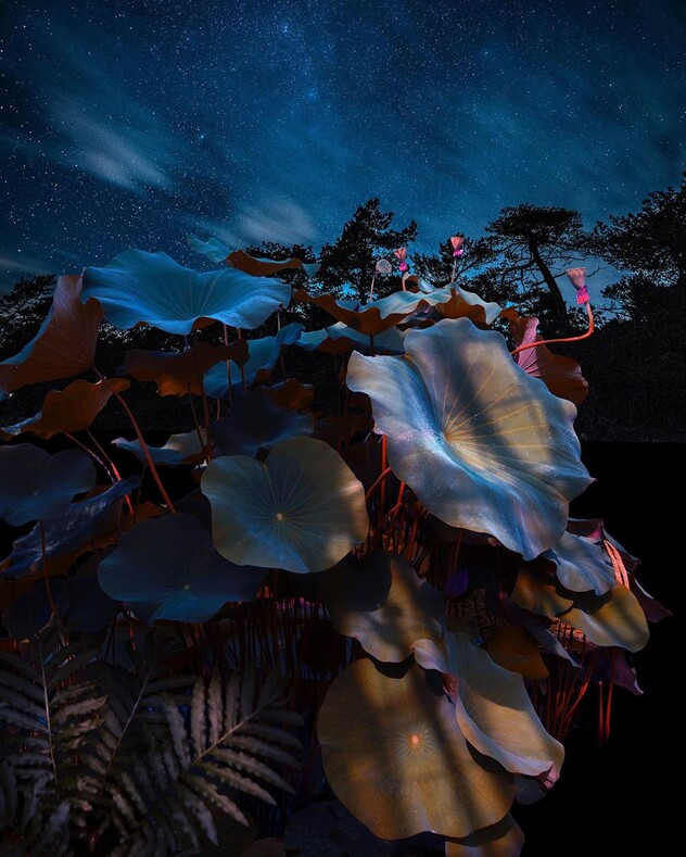 Тот случай, когда камеру берет в руки нейробиолог: фантастические снимки ночного леса, заставляющие посмотреть на мир под другим углом