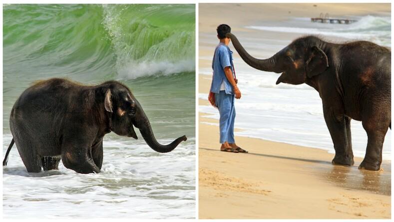 Эти фото сделают ваш день: слоненок, который очень любит пляж и море, развеселил пользователей Сети своим поведением