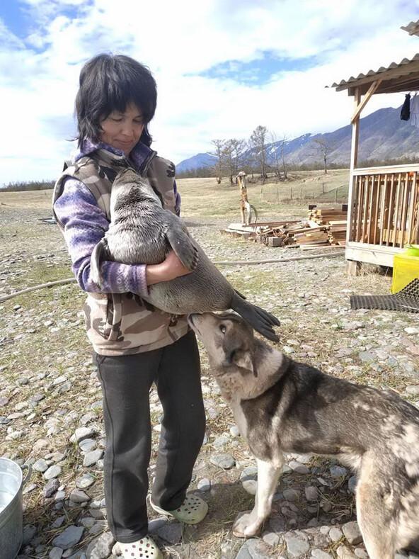 Лайка помогла детенышу нерпы выжить: трогательный случай на байкальской метеостанции Солнечная