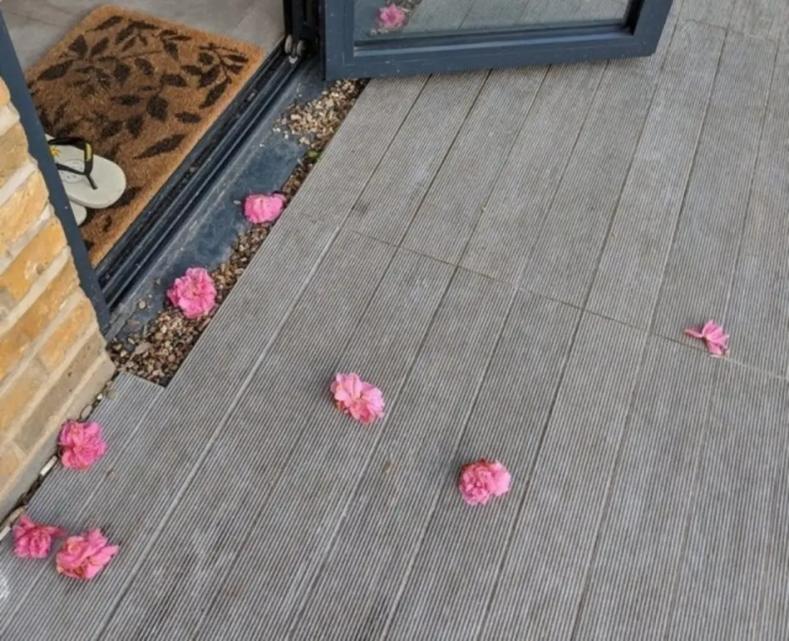 Когда тайным поклонником оказалась кошка: она воровала розы у своих хозяев, чтобы подбросить цветы любимым соседям (милые фото)